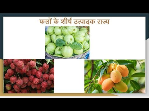Fruits -  Leading Producer  States in India