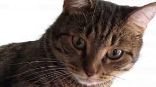 Кошка на подоконнике на фоне жалюзИ