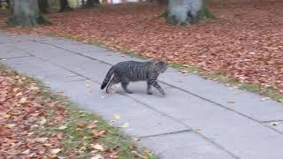 JAROMIN - DPS : wyszedł pan Władek na spacer a zaraz pojawiły się 3 jego tygryski : 4.11.2018/15:48