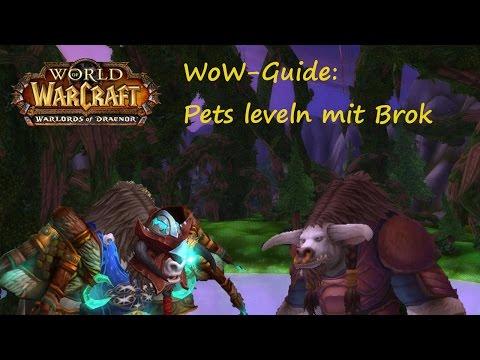 WoW-Guide: Pet-Leveln mit Brok