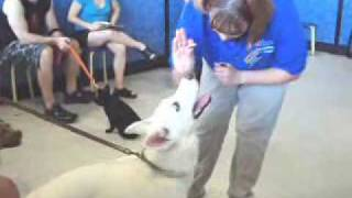 Annabella At Pet Smart's Dog Training Class: Video 2