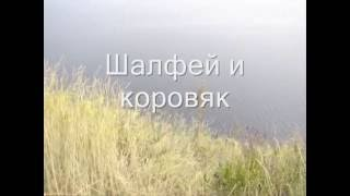 Изучаем флору и фауну в средней полосе России