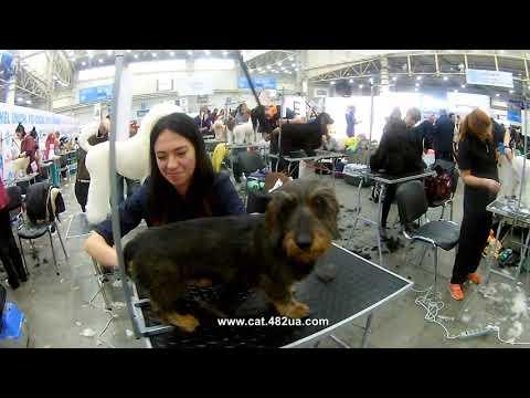 3, FCI CACIB, Київська Русь 2019, Киев, выставка собак