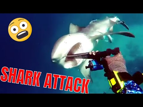 NEAR DEATH EXPERIENCE CAPTURED by GoPro compilation 2017- ANIMALS WENT CRAZY | SHARKS