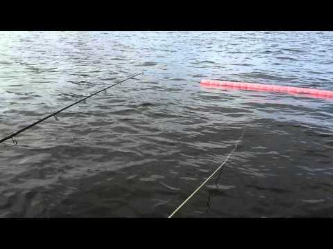 видео: Ируся тянет очередного сома//Рыбалочка