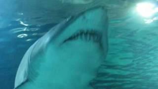 Wizyta w Oceanarium - Walencja - 29.10.2010r .wmv