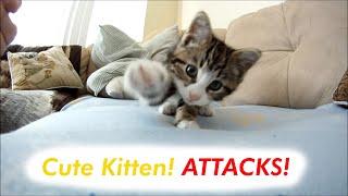 Kitten attacks Camera!