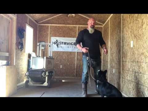 Teaching small dogs to heel