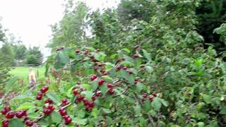 Шварцвальд Германия  Видео фильм Часть 1(, 2011-07-25T19:04:15.000Z)