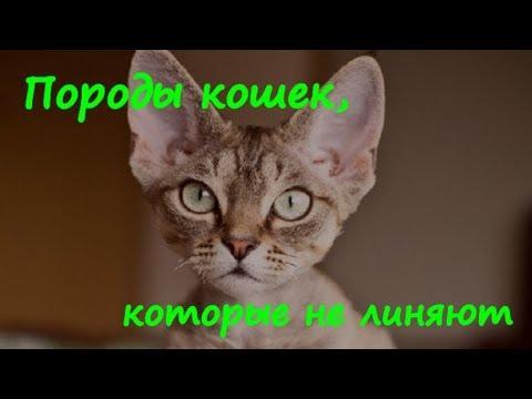 Вопрос: Какую из пород кота не желательно держать дома?