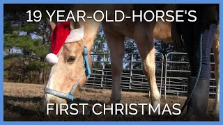 19-Year-Old Horse Spends 1st Christmas With Loving Family