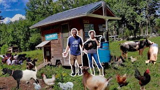 Raising 143 FARM Animals to FEED our FAMILY on our HOMESTEAD