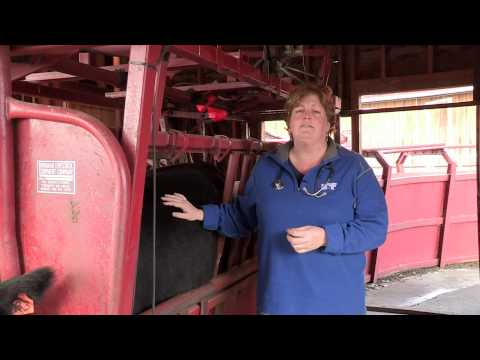 Identifying Sick Livestock with Dr. Lisa Lunn