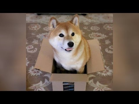 BEST DOG videos you've EVER SEEN - Funny DOG videos
