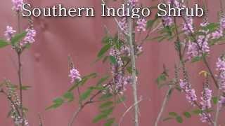 http://www.tytyga.com/Florida-Tropical-Perennial-Plants-s/2122.htm ...