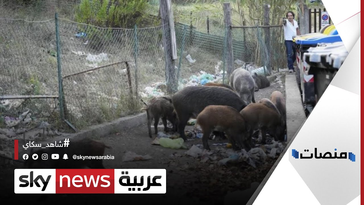 الخنازير البرية تقتحم روما.. والساسة يستخدمونها كسلاح | #منصات  - نشر قبل 32 دقيقة