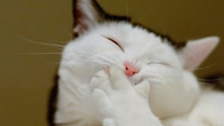 Топ самых смешных видео про котов!