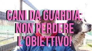 CANI DA GUARDIA: Non perdere l'obiettivo!