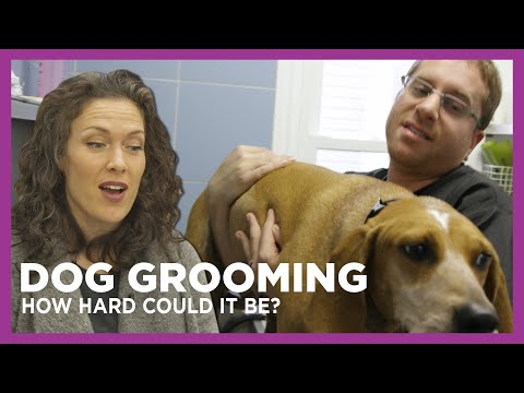 How Hard Could It Be to Groom a Dog? with Damnit Maurie