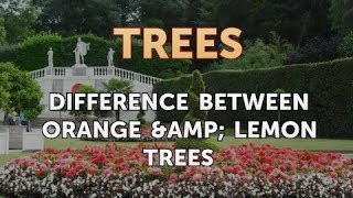 Difference Between Orange & Lemon Trees