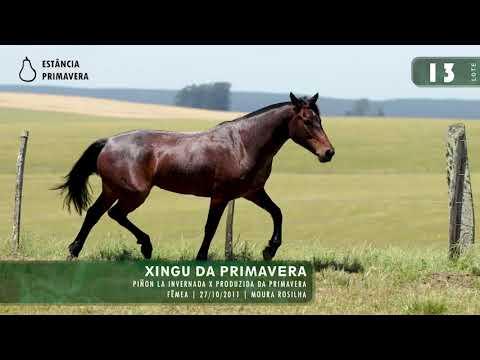LOTE 13 - Xingu da Primavera