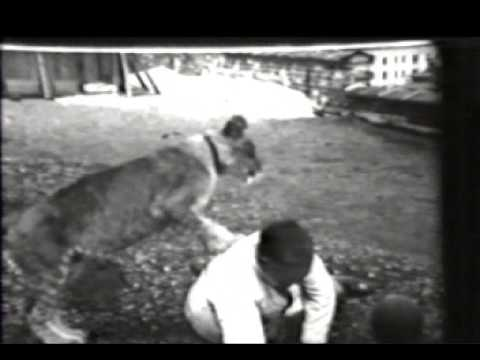 Milwaukee Public Library Simba video clip from MPM