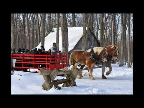 Land For Sale In Quebec, __SOLD __  - 20 Acres For $35,000