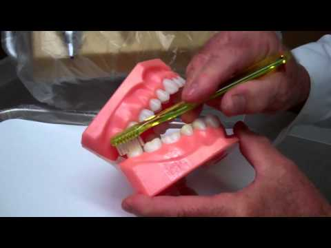 Brushing Technique - Oral Hygiene Instructions by Dr. Berdy, periodontist Jacksonville, FL