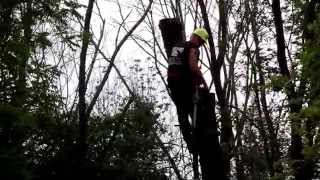 Kiss My Ash Goodbye - Losing 13 large white ash trees