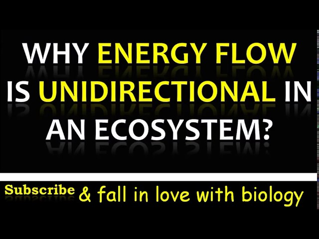 Why is Energy flow Unidirectional in an Ecosystem? 3 minute video