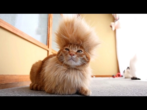 CATS you will remember and LAUGH all day! – World's funniest cat videos