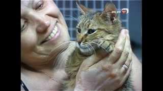 Бездомные кошки ищут своих хозяев