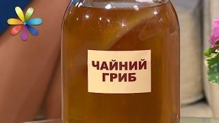 Чайный гриб: какая польза и вред? – Все буде добре. Выпуск 984 от 16.03.17