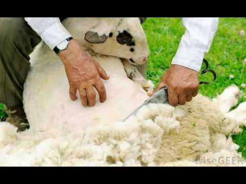 What is Worsted Wool
