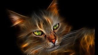 Кошка доктор и Душа твоего дома