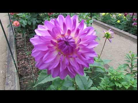 Fleur dans le parc floral de Paris