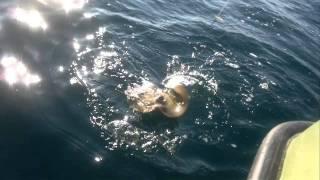 Рыбалка на Черном море.МОРСКОЙ КОТ.Сентябрь 2011