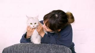 わたなべ麻衣×びょーちゃん わたなべ麻衣 検索動画 12