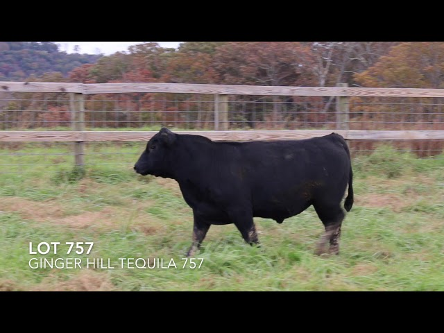 Ginger Hill Angus Lot 757