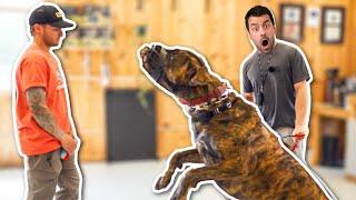 AGGRESSIVE RESCUE DOGS LAST CHANCE AT LIFE...