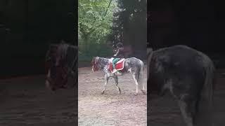 primera clase de equitación