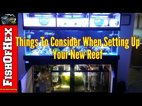 Things To Consider When Setting Up A New Reef Tank | Beginner Guide