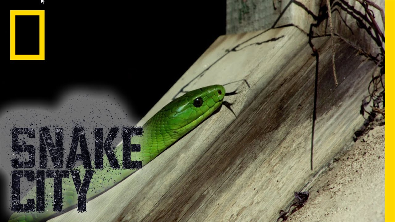 Green Snake Identification Snake City Youtube