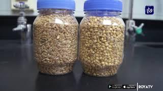 """""""الوطني للبحوث الزراعية"""" يطلق أصنافا جديدة من الحبوب (22/1/2020)"""