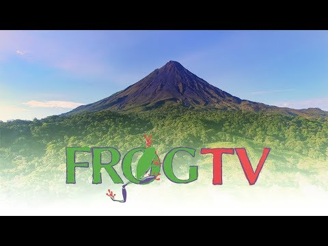 Our Costa Rica Travel Channel: Frog TV