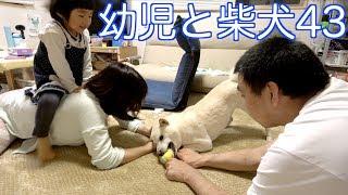 犬は違うものを持ってきた。 前回 https://www.youtube.com/watch?v=faq...