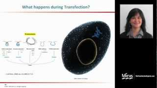 Transfection 101