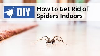 How to Get Rid of Spiders Indoors