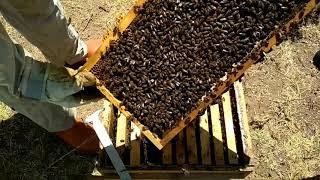 Kışlık bakımda yapılması gerekenler ve Arıya kislik düzen verme