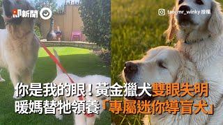 黃金獵犬雙眼失明 暖媽替牠領養「專屬迷你導盲犬」|寵物|溫馨|狗